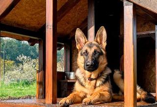 Идеальная будка для немецкой овчарки