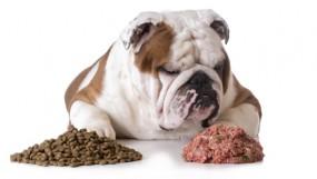 Чем кормить собаку – кормом или натуралкой?