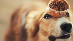 Что нельзя есть собакам?