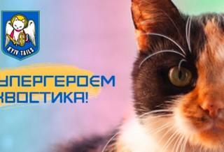 Фонд Киевские Хвостики – спасем животных вместе!
