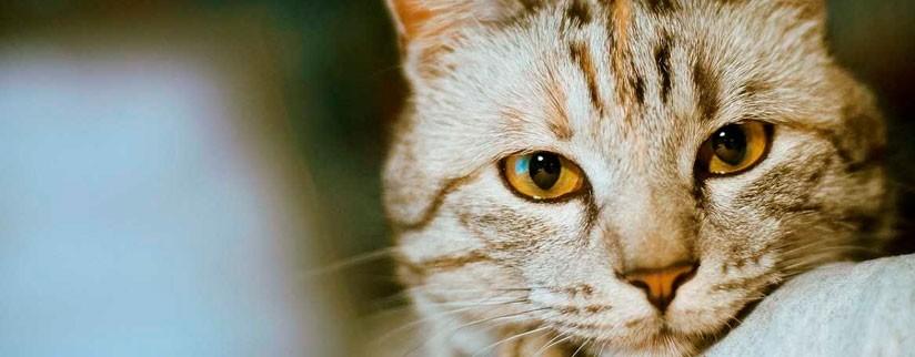 Гастрит у кота – симптомы и лечение