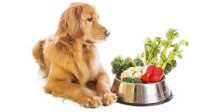 Гастрит у собаки – причины, симптомы, диета
