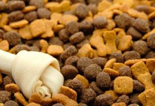 Где купить корм для собак?