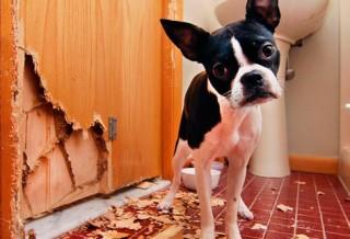 Как оставить собаку одну дома?