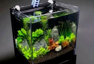 Как подготовить аквариум перед запуском рыбок?