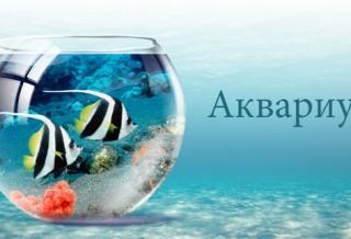 Как подобрать аквариум?