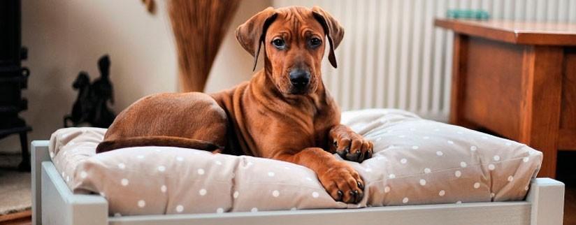 Как подобрать размер лежака для собаки?