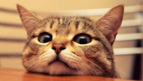Как правильно кормить кастрированного кота?