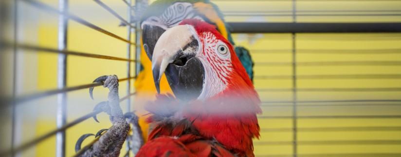 Как выбрать клетку для птицы?