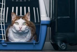 Как выбрать размер переноски для кошки?