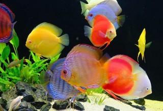 Как запустить аквариум с нуля?