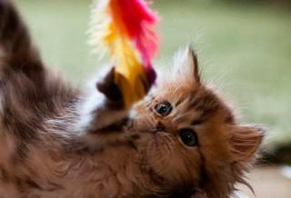 Какие игрушки нужны котенку?