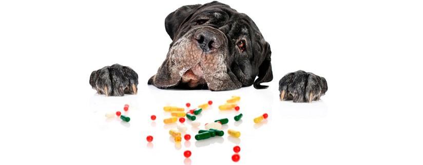 Какие витамины давать собаке при натуральном кормлении?
