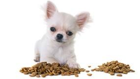 Каким кормом кормить чихуахуа?