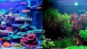 Морской или пресноводный аквариум?