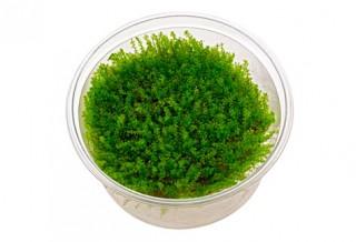 Новинки на сайте – живые растения для аквариума Aquayer