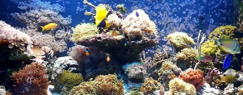 Обустройство морского аквариума