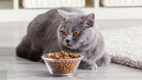 Правила кормления кошек сухим кормом
