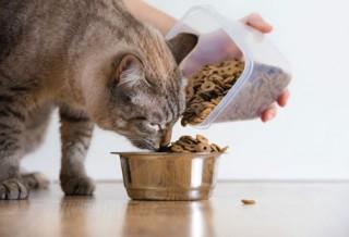 Правильный сухой корм для кошек