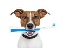Зубные пасты и щетки