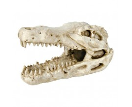 Декорация Trixie Череп крокодила 14 см (8712)
