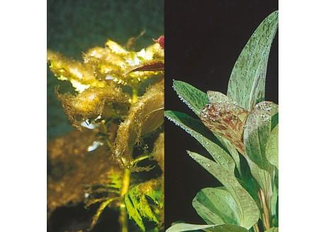 Кондиционер для борьбы с водорослями в аквариуме JBL Algol