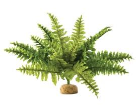 Растение для террариума Exo Terra Boston Fern