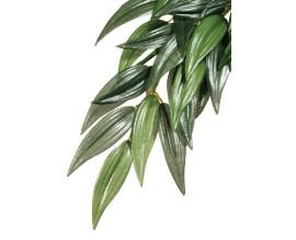Растение для террариума Exo Terra Rucus