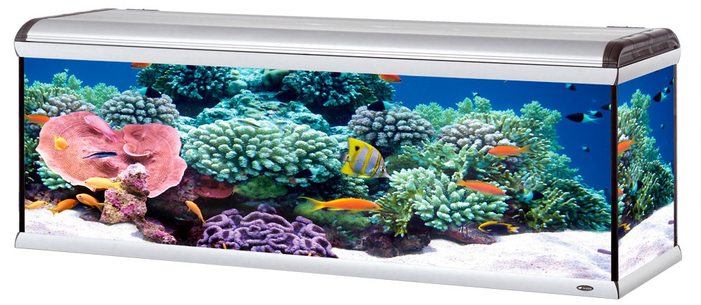 Купить аквариум в Харькове